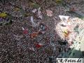 VfB-KSC 146 Kopie